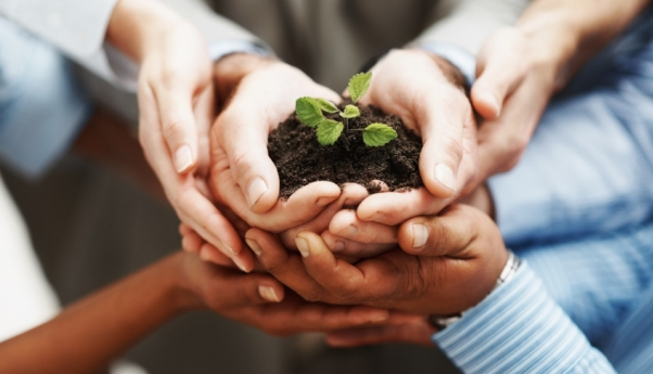 6 hands holding a small plant in soil